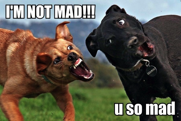 Funny+Dogs+-+I%27m+Not+Mad+-+U+So+Mad%21.png