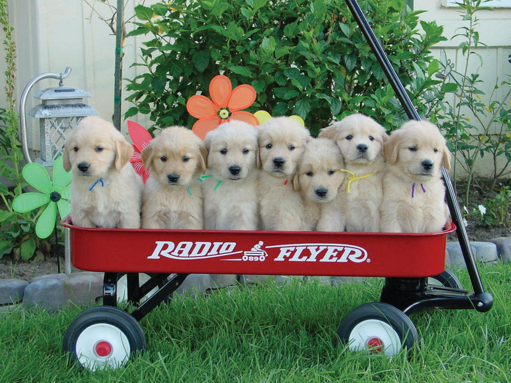 puppies-in-a-wagon.jpg