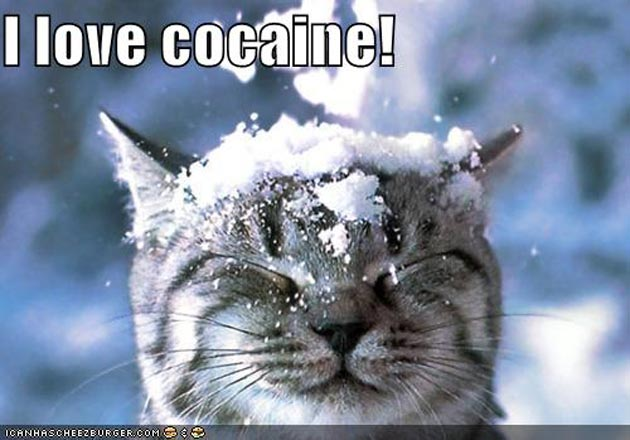 cocaine-cat.jpg