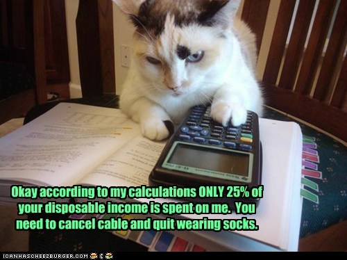 funny-cat-pictures-my-budget-needs-an-increase-now.jpg NOT IN
