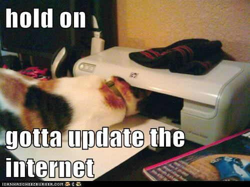 funny-cat-pictures-hold-on-gotta-update-the-internet.jpg