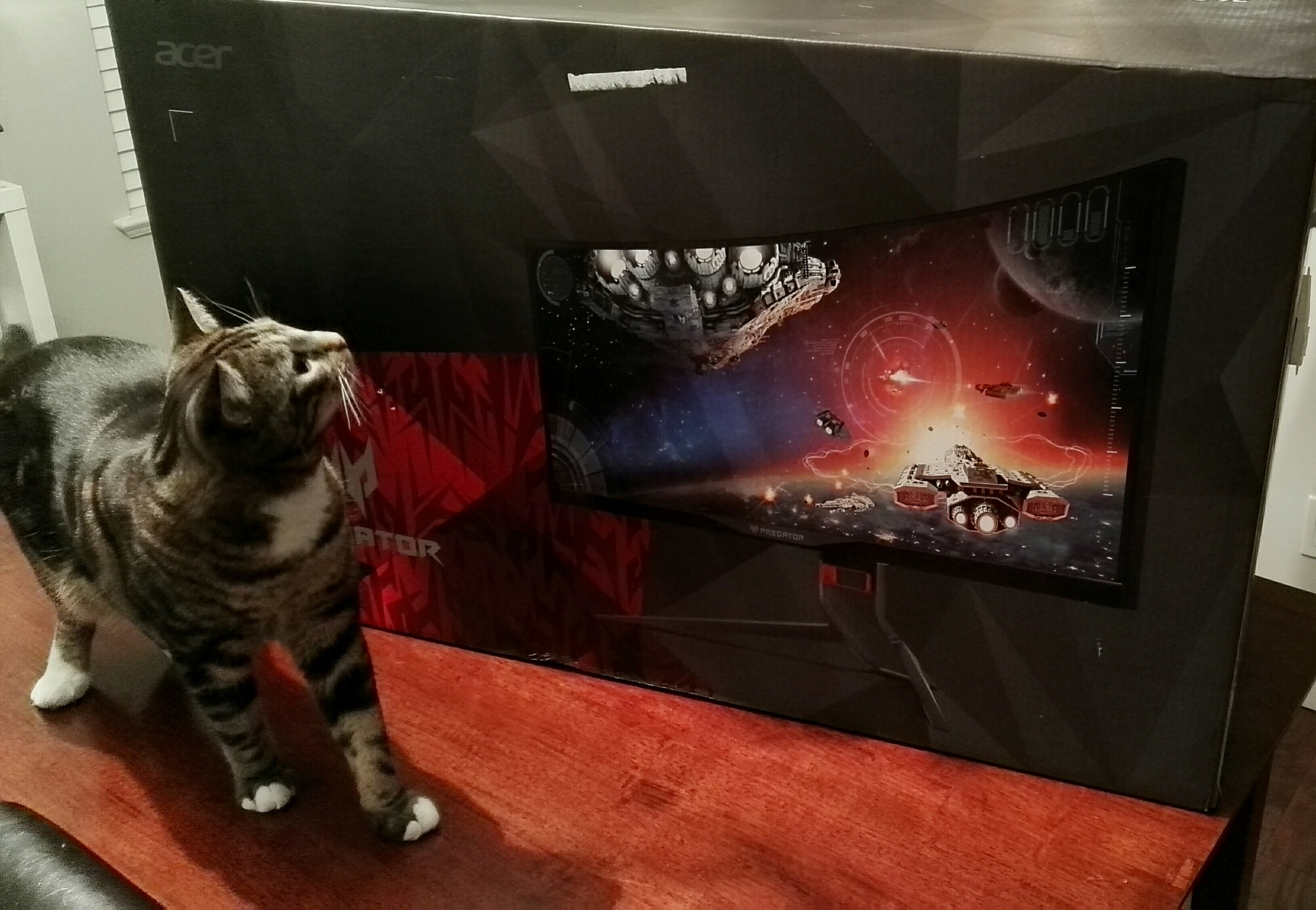 My cat Pixel loves this new monitor. Yes that is actually his name :)